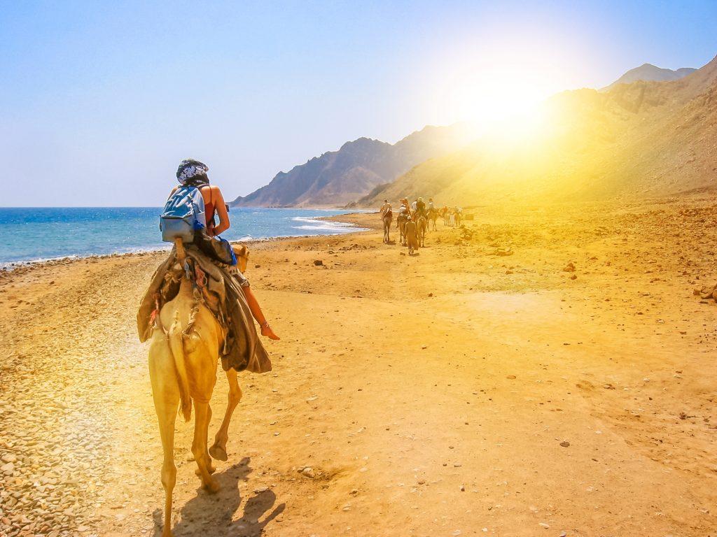 Egypt tours on camel