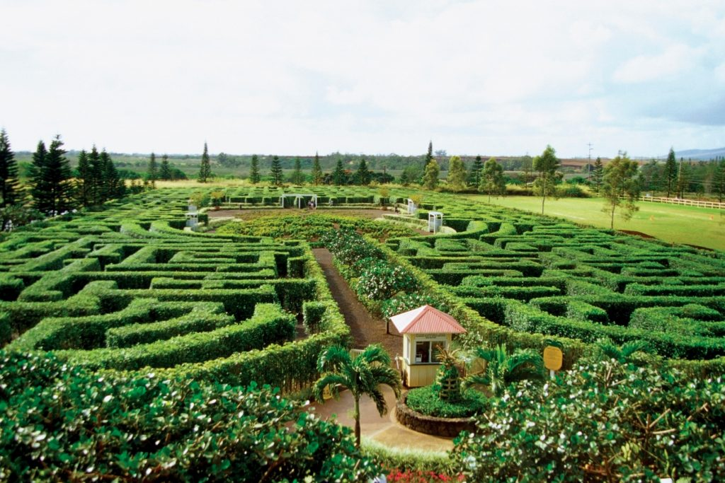 Places to Visit in Oahu Dole plantation
