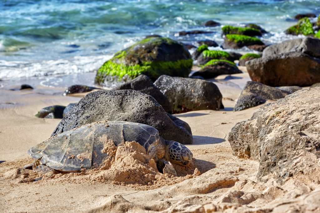 Places to Visit in Oahu Turtle beach