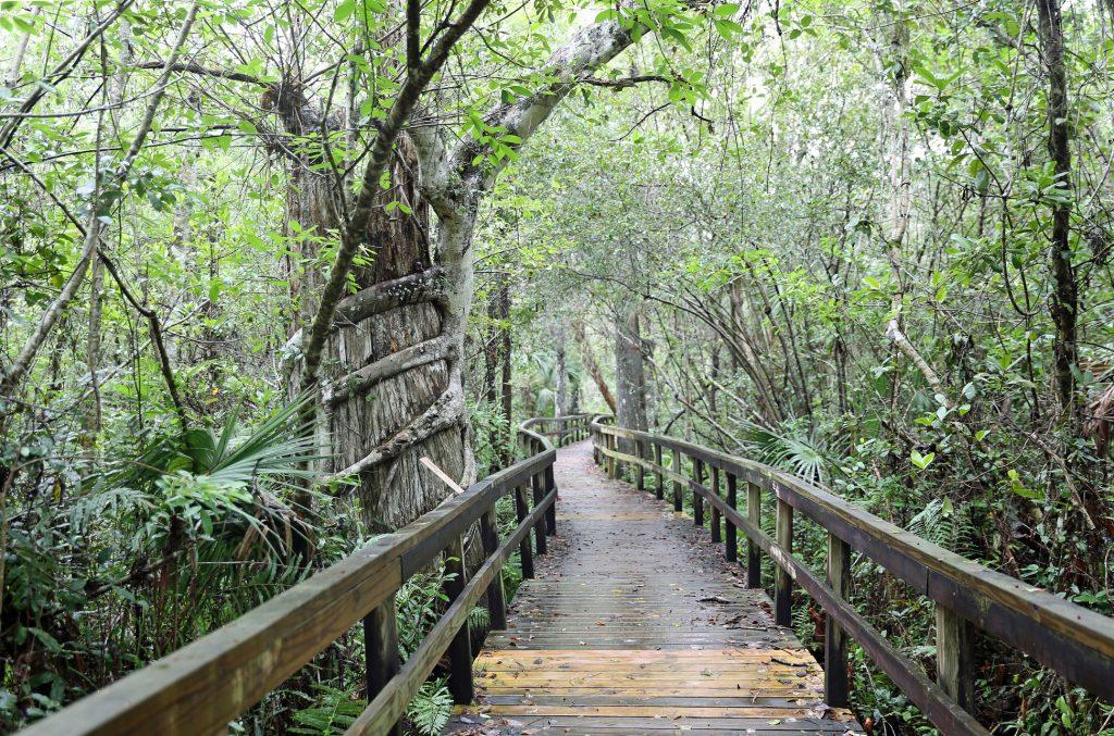 Boardwalk trail at Everglades