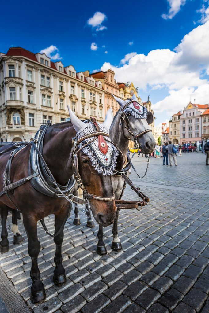 Popular activities in Prague Horse Carriage in Old Square