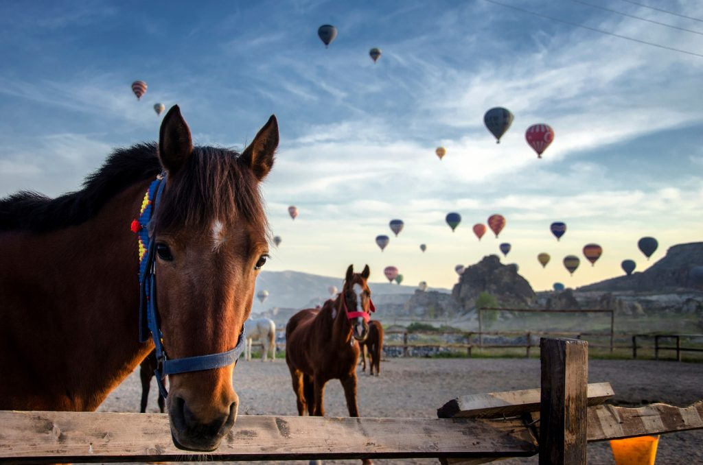 Cappadocia-horse-riding-Turkey