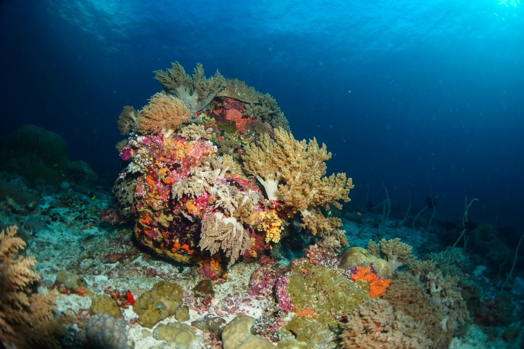 Coral reef at tubbataha
