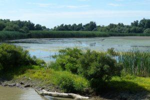 Visit Danube Delta in Romania
