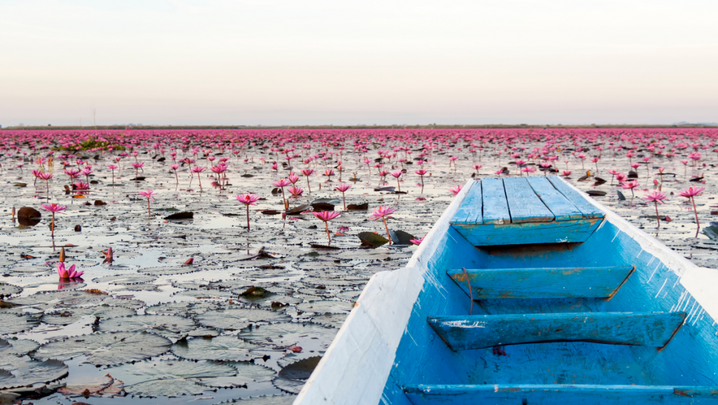 Nong Han Kumphawapi Lake - Red Lotus Sea unique places in Thailand you should see